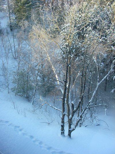 Along a snowy path